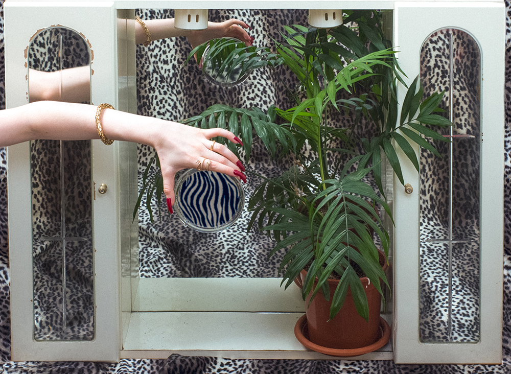 Hand holding a mirror in front of a plant
