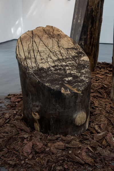 Standing Trees, Weeds, Streams, and Uplifted Rocks by Bicheng Liang - Favorite Projects - 31 August - 6 September